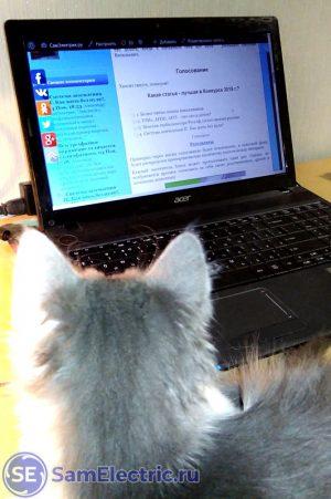 Мой кот Махрютка уже знает, за кого голосовать. А вы?
